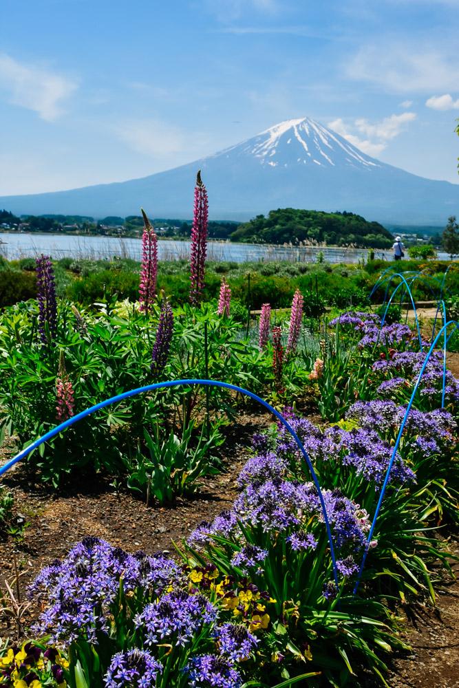 Japan Botanical Garden